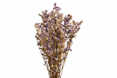 Limonium Press Natural 04