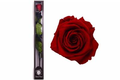 Roseamor XL Tija RED-01