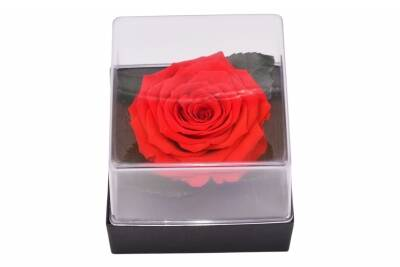 Roseamor GB3 RED-02