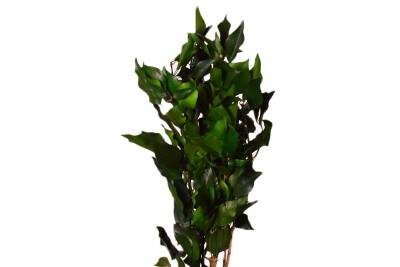 Hedera - 140g green