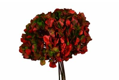 Hortensia Green-Red