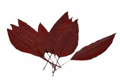 Tropical Leaf Red