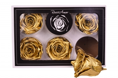 Roseamor XL Metal Light Gold