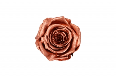 Roseamor XL Metal Copper